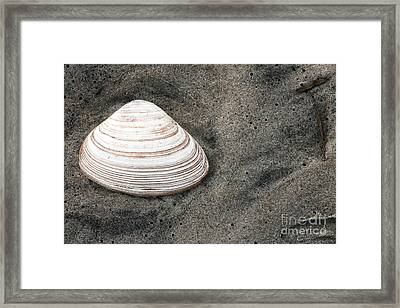 Shell In The Sand Framed Print by John Rizzuto