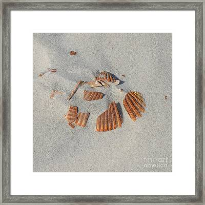 Shell Jigsaw Framed Print by Meandering Photography