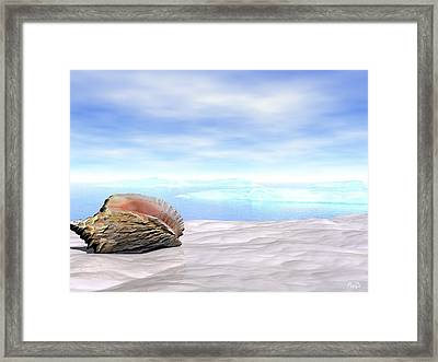 Shell Framed Print by John Pangia