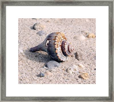 Framed Print featuring the photograph Shell by Karen Silvestri