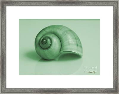 Shell. Light Green Framed Print