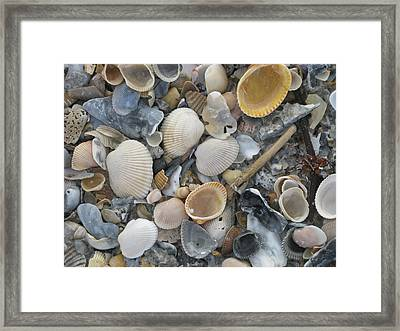 Shell Mosaic Framed Print
