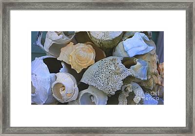 Shell Framed Print by Nancie DeMellia