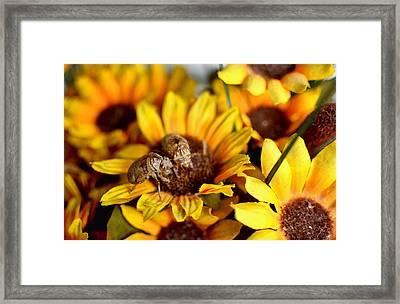 Shell Of A Bug On Flower Framed Print by Jeffrey Platt
