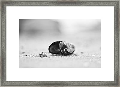 Shell On The Beach Framed Print by Andrew Raby