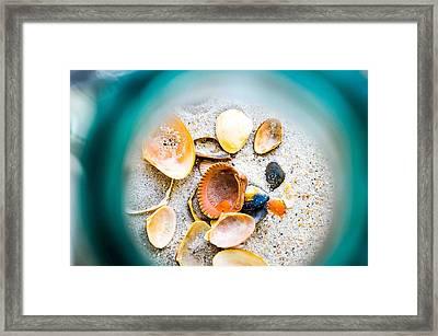 Shell Paradise  Framed Print by Mary Ward