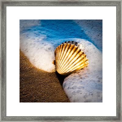 Shell Series No. 2 Framed Print by John Pagliuca