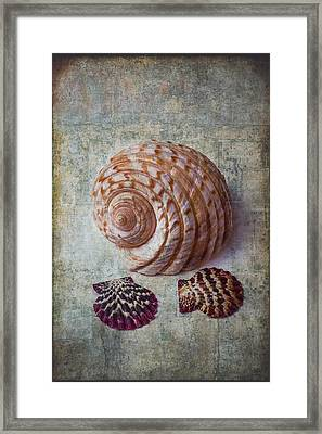 Shell Texture Framed Print by Garry Gay