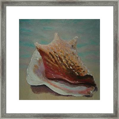 Shell Three - 3 In A Series Of 3 Framed Print by Don Young