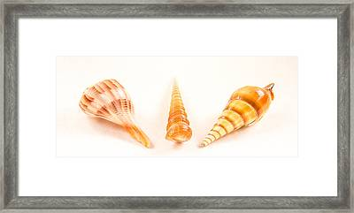 Shell Trio Framed Print by Jean Noren