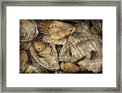 Shelling It Out Framed Print by Davina Washington