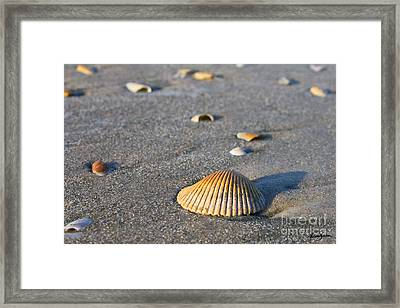 Shells 01 Framed Print