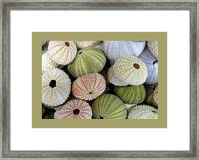 Shells 5 Framed Print by Carla Parris