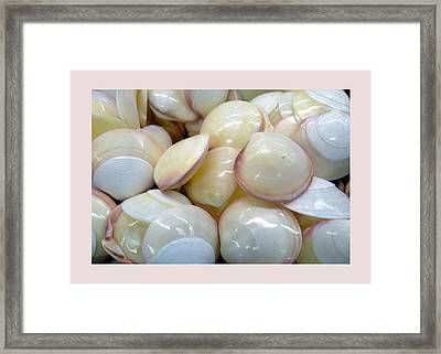 Shells - 6 Framed Print by Carla Parris