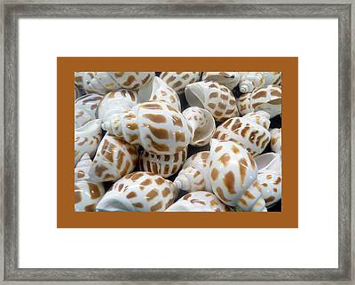Shells - 7 Framed Print by Carla Parris