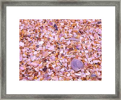 Framed Print featuring the photograph Shells A Million by Brigitte Emme
