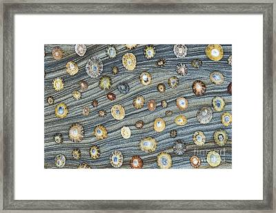 Shells And Sandstone Pattern Framed Print by Tim Gainey