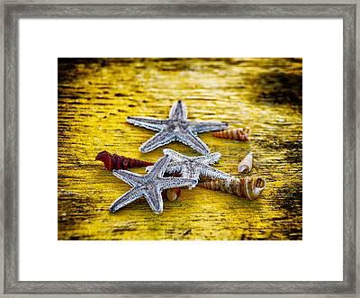 Shells And Starfish Framed Print