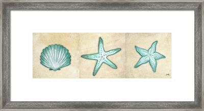 Shells I Framed Print