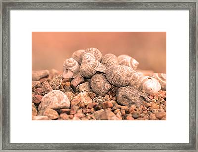Shells In A Pile Framed Print by Tommytechno Sweden