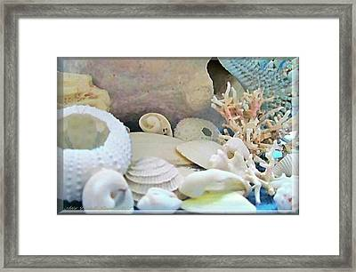 Shells In Pastels Framed Print by Danielle  Parent