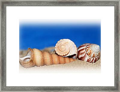 Shells In Sand Framed Print by Francie Davis