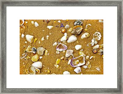 Shells In The Sand Framed Print by Kaye Menner