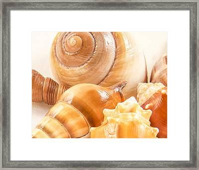 Shells Framed Print by Jean Noren