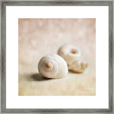 Shells Framed Print by Lyn Randle