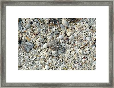 Shells On A Beach Framed Print