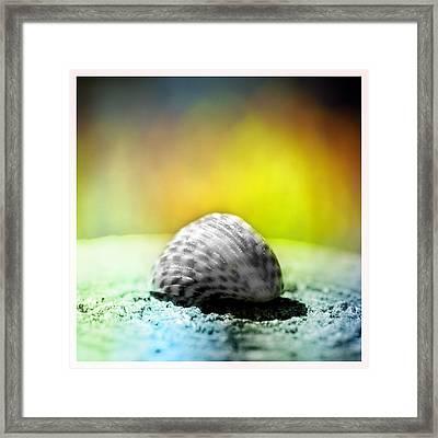 Shells On A Rock Framed Print