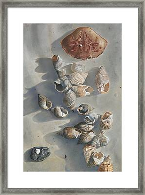 Shells On A Sandy Beach Framed Print