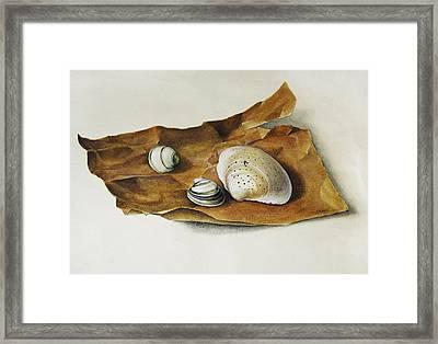 Shells On Paper Framed Print by Horst Braun