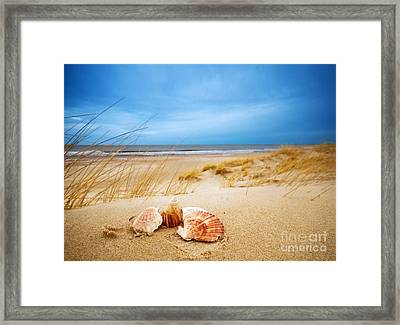 Shells On Sand Framed Print by Michal Bednarek