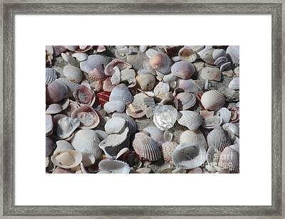 Shells On Treasure Island Framed Print