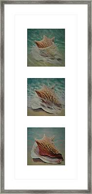 Shells Triptych 2 Framed Print by Don Young