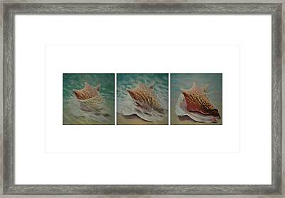 Shells Triptych Framed Print by Don Young