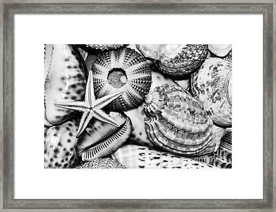 Shellscape In Monochrome Framed Print by Kaye Menner