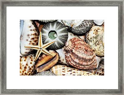 Shellscape Framed Print by Kaye Menner