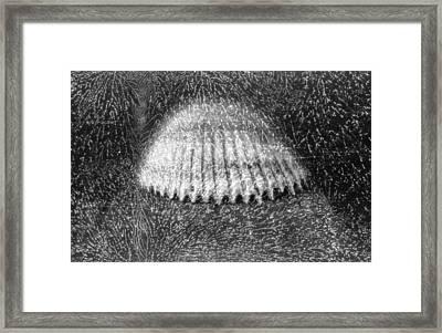 Shellshocked Framed Print