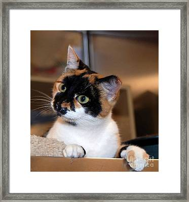 Shelter Cats Are The Best Framed Print