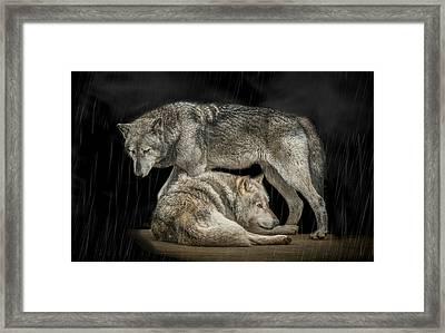 Shelter Framed Print by Paul Neville