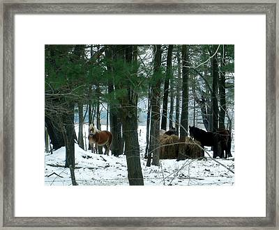 Sheltered In The Trees Framed Print