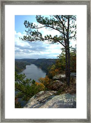 Framed Print featuring the photograph Sheltering Pine by Jim McCain