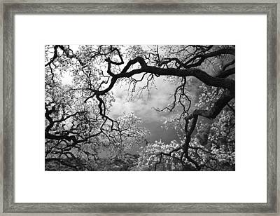 Sheltering Sky Framed Print by Laurie Search
