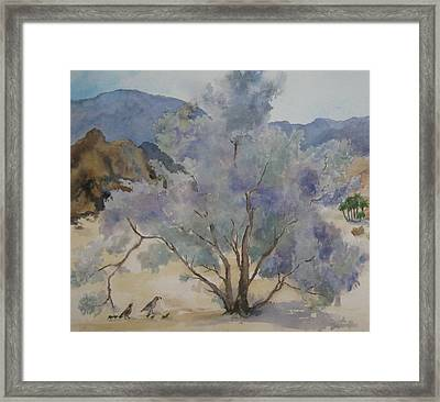 Smoketree In Bloom Framed Print by Maria Hunt