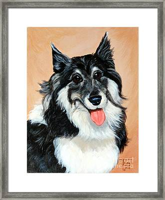Sheltie Framed Print