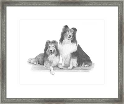 Shelties Framed Print by Joe Olivares