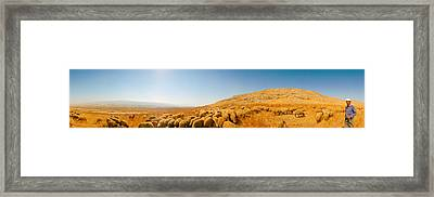 Shepherd Standing With Flock Of Sheep Framed Print by Panoramic Images
