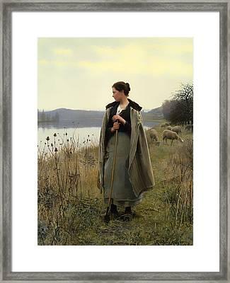 Shepherdess Of Rolleboise  Framed Print